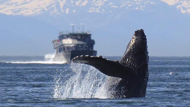 Menneskets industrialisering af havet har gjort det til et støjhelvede for dyrene. Foto: Pixabay