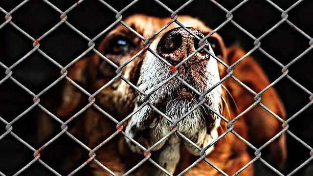 Dyrenes Vagtcentral er blevet så populær, at den er blevet en stor udgiftspost i Dyrenes Beskyttelses budget. Foto: Pixabay