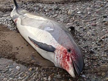 Halvdelen af havets dyr er udryddet på 42 år