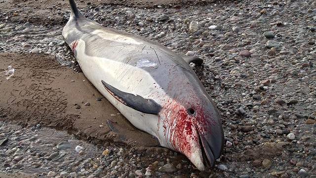 Halvdelen af havets dyreliv er forsvundet på 42 år. Mennesket bærer skylden. Foto: Toxic Web/flickr