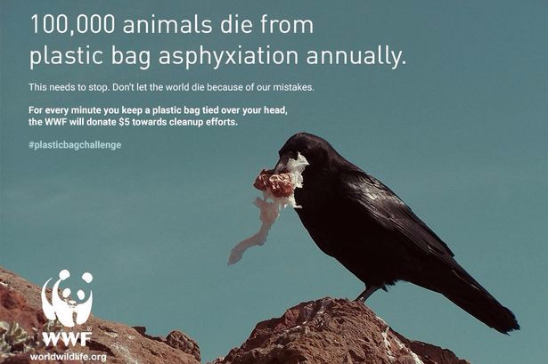 Her er en af de hjemmelavede plakater med den falske kampagne. WWF understreger, at organisationen ikke har noget med kampagnen at gøre.