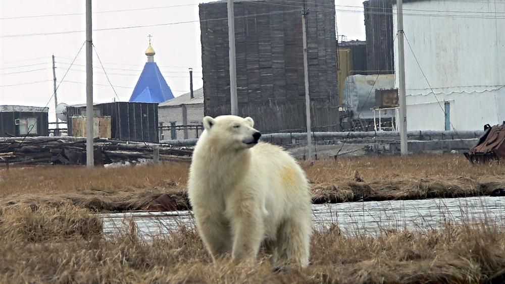Industrien er trængt ind på dyrenes områder.