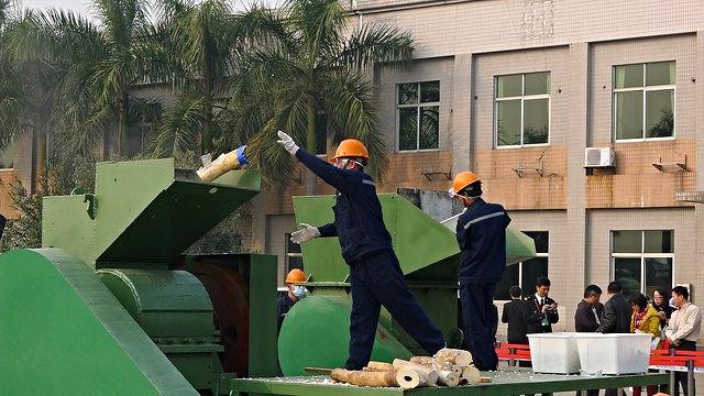 Toldere i Zürich har fanget tre kinesere i forsøget på at smugle gods fra truede dyr videre til Beijing. Dette foto viser en tidligere aktion i Kina, da myndighederne destruerede ulovlige elfenben. Arkivfoto: International Fund for Animal Welfar Animal Rescue's Blog/flickr