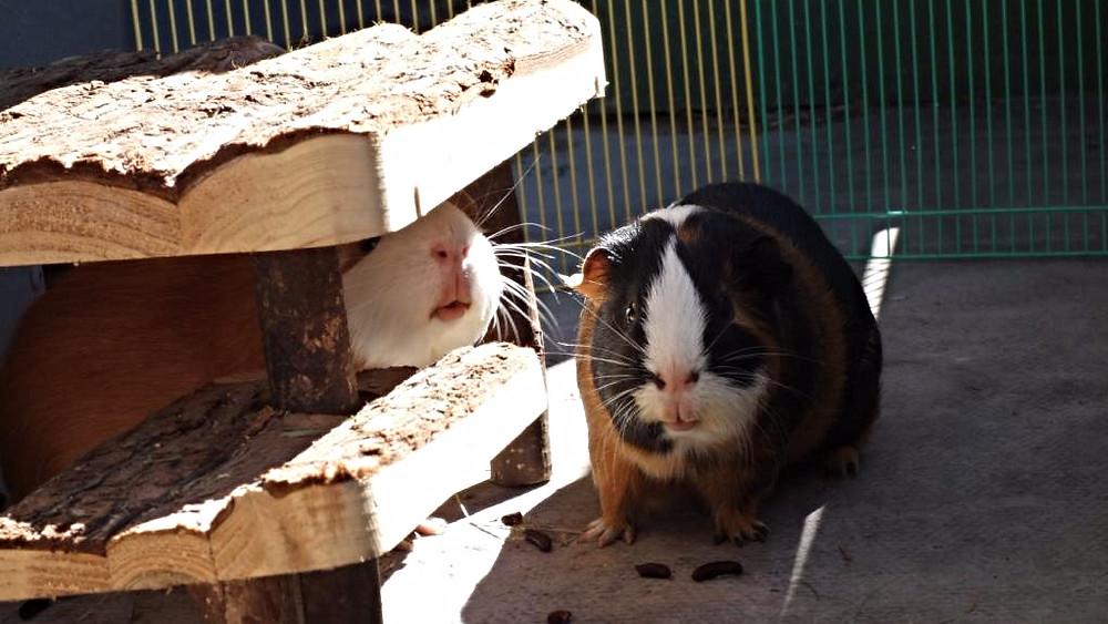Dyr vil fremover blive betegnet som følende væsener i den australske lovgivning.