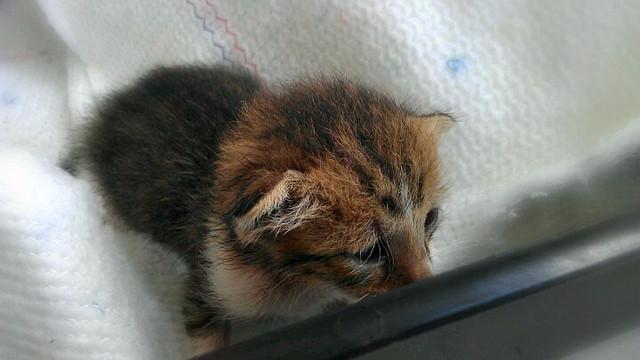 Danskerne kasserede sidste år 3.389 katte, der blev efterladt i naturen eller på rastepladser. Tallet dækker selvsagt ikke over de dyr, som ikke blev fundet. Foto: miramar2009/flickr