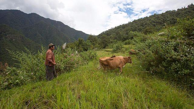Bhutan er et lille og relativt fattigt land sammenlignet med Danmark, men det bremser ikke nationens ambition om at forblive klimaneutralt og omlægge al landbrug til økologisk landbrug. Foto: Christopher Michel/flickr