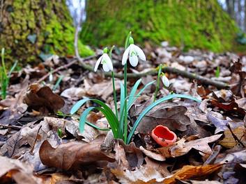 Forskere: Foråret vil komme næsten en måned tidligere