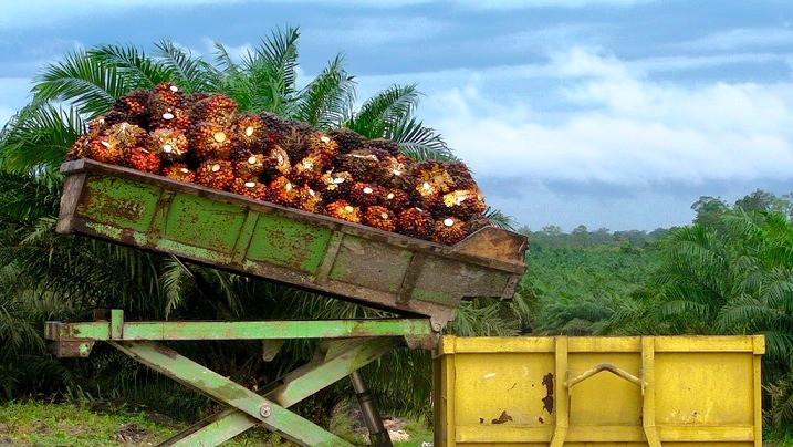 Virksomheder, hvis aktiviteter kan føre til skovrydning, har storbanker i ryggen, viser en ny undersøgelse. Foto: Rainforest Action Network/flickr