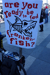"""Kritikere kalder GM-laksen for """"Frankenfish"""" efter Frankenstein. Foto: Steve Rhodes/flickr"""