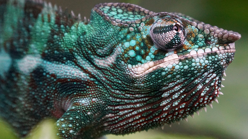 Adskillige dyrearter er i fare for at blive udryddet pga. menneskets fældning af skov, viser et nyt studie. Foto: Pixabay