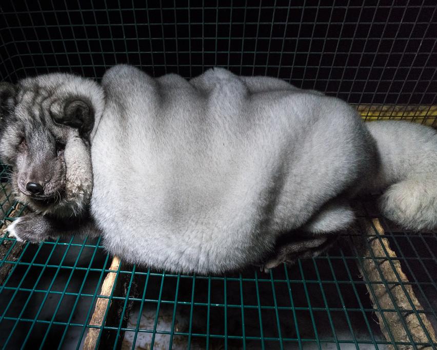 Oikeutta_eläimille