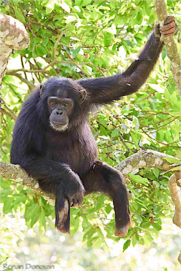 Max mangler begge sine fødder, men kan stadig klatre i træer. Foto: Ronald Donovan