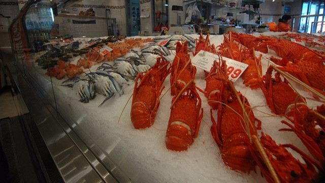 Flere fiskebestande er ved at forsvinde, fordi de overfiskes. Foto: Ernesto Andrade/flickr