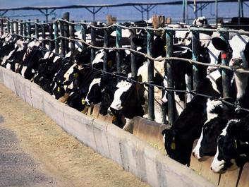Vi har masser at vinde ved at reducere den animalske produktion