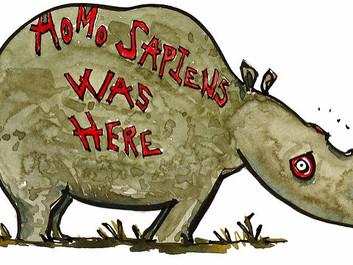 Nu har de fået nok i Zimbabwe: Skærer hornene af næsehorn