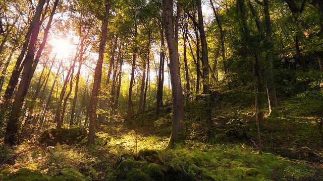 Teleselskabet GreenSpeak har doneret sit overskud væk. Organisationen Verdens Skove modtog mest blandt i alt 15 organisationer og initiativer, der fik del i overskuddet. Foto: Dejan Hudoletnjak/flickr