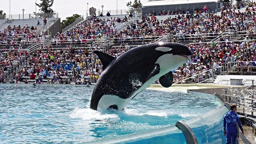 På en måned er SeaWorld blevet sagsøgt to gange af parkens gæster for behandlingen af parkens dyr.