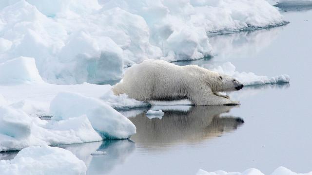 Permafrosten er mere sårbar over for global opvarmning, end forskere hidtil har troet, viser et nyt omfattende studie. Foto: Christopher Michel/flickr