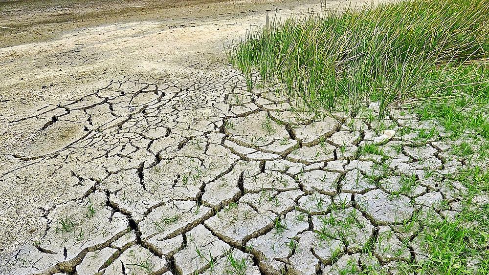 Et nyt studie viser, at store dele af klodens landområder vil blive mere tørre i fremtiden, hvilket øger risikoen for bl.a. skovbrande og ørkendannelse. Foto: Pixabay