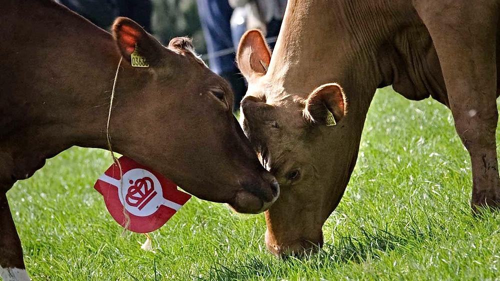 Økologi er bedre for miljøet og folkesundheden end konventionelt landbrug, mener en professor i jordvidenskab. Foto: Økologisk Landsforening