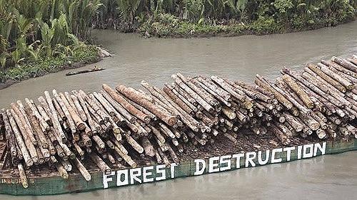 Der ryddes mere regnskov i Brasilien end for blot få år siden. Greenpeace-aktivister har her formået at male et budskab på siden af et skib, der transporterer træer fra skovfældning. Foto: Greenpeace/Jeremy Sutton-Hibbert 2008