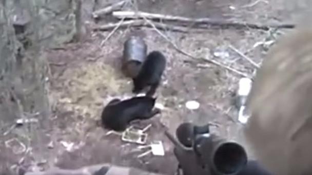 En niårig dreng fejrede sin fødselsdag med at skyde en bjørn. Foto: Screenshot/YouTube