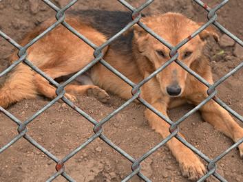 Minister vil straffe dyremishandling hårdere