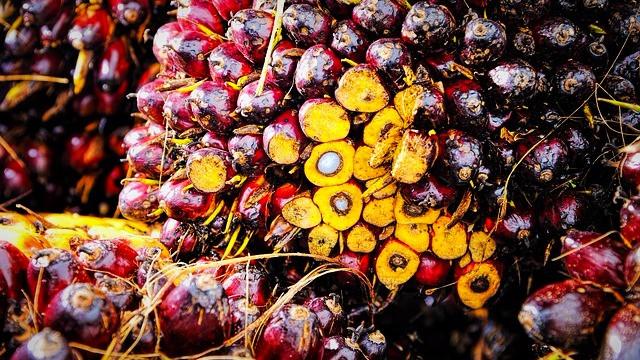 Forbruget af palmeolie er faldende i Danmark. Foto: Pixabay