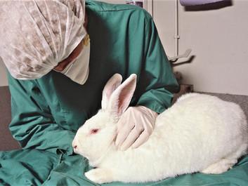 Paradoks i EU: Producenter tvinges til at teste kosmetik på dyr trods forbud