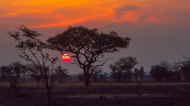 En 37-årig britisk pilot blev skudt ned over Serengeti National Park i jagten på krybskytter. Foto: Anita Ritenour/flickr