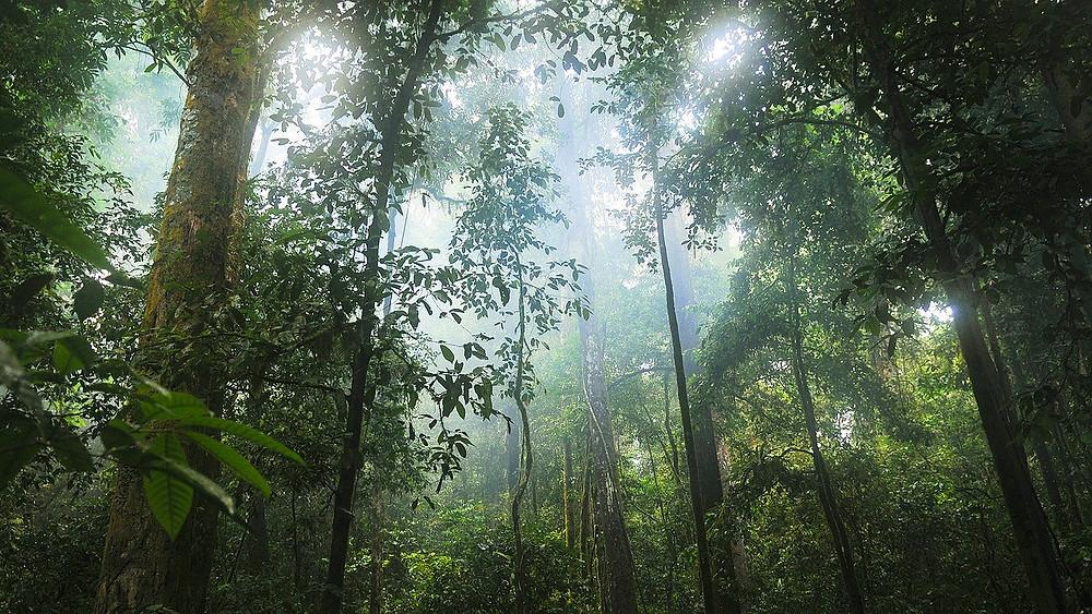 Et nyt studie viser en massiv nedgang i mængden af insekter og fugle i Luquillo-skoven i Puerto Rico. Billedet er ikke fra den pågældende skov. Foto: Pixabay