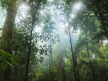 Forsker vendte tilbage til regnskoven efter 36 år og så, at det meste liv var væk