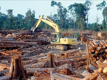 Nu fældes der igen mere regnskov