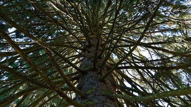 Europas skov har øget den globale opvarmning, fordi vi har plantet mørke træsorter frem for lyse, lyder det fra forskere bag et ny studie. Foto: wolf4max/flickr