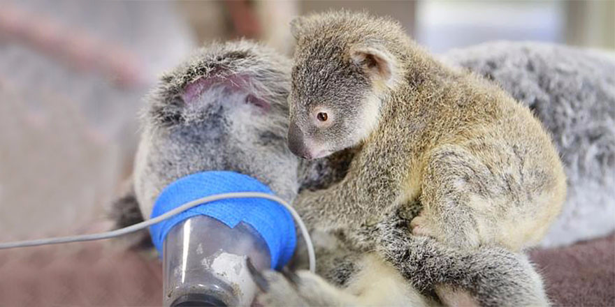 koala4_edited.jpg