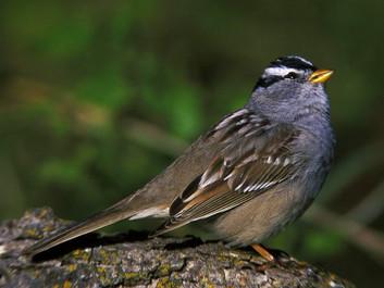 Forskning: Populær sprøjtegift gør fugle desorienterede og giver dem maveproblemer