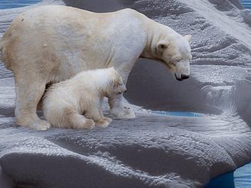Ekstremvarmen i Arktis var næsten umulig for 100 år siden