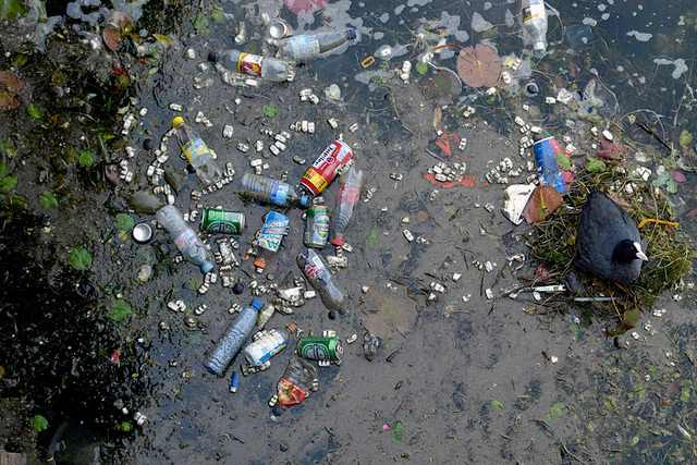 Midt i al forureningen og skraldet har en fugl sin rede. Foto: Dominique Cappronnier/flickr