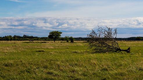 Den danske natur er langt fra FN's 20 mål om biodiversitet i 2020. Foto: Thomas Rousing/flickr