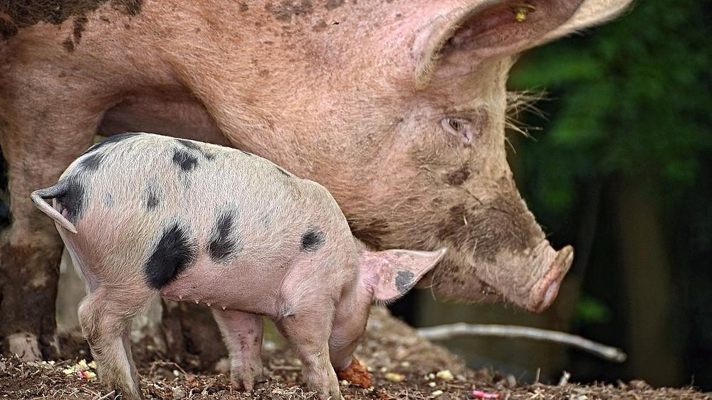 De britiske politikere har besluttet ikke at anerkende dyr som følende væsener i lovgivningen. Foto: Pixabay