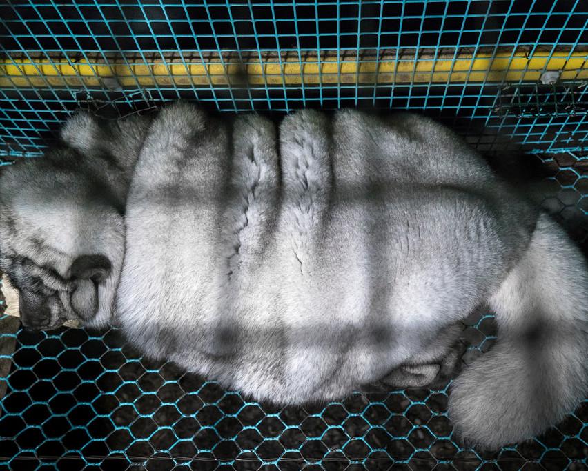 Oikeutta_eläimille3