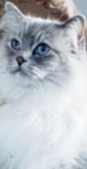 Sarah - Blue Lynx Mitted.jpg