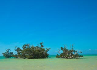 Archipiélago de las Quirimbas: manglares, fortalezas y boa gente
