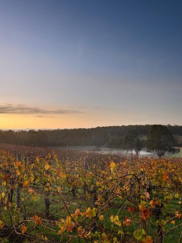 Aravina Autumn