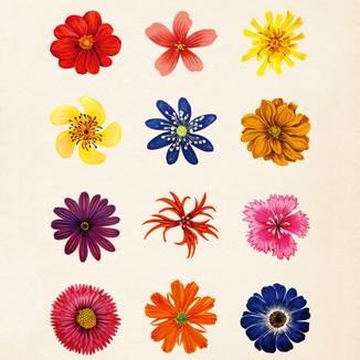 [Yoanna]Flower2