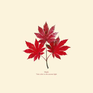 [J]Maple