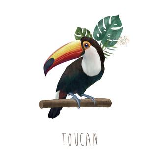 [May]Toucan