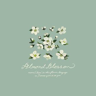 [Kim-su-yeon]Almond-flower-2