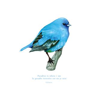 [J]Bluebird