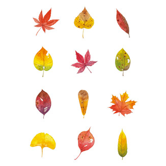 [J]Leaves-pattern